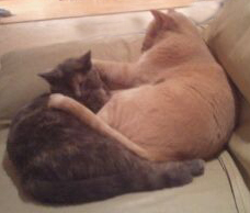 Here she is just after her spaying with the big blond boy who passed away last year.