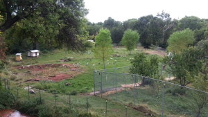 What the pastures look like now