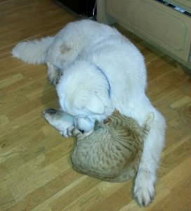 bear&hiscat