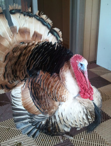 tom turkey on a porch