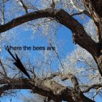 beesinTrees