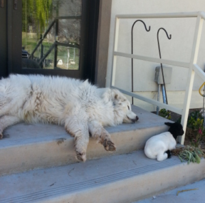 a dog and a lamb on cement stairs