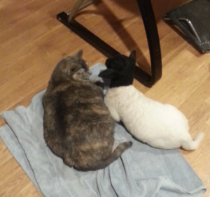 a cat and a lamb on a towel
