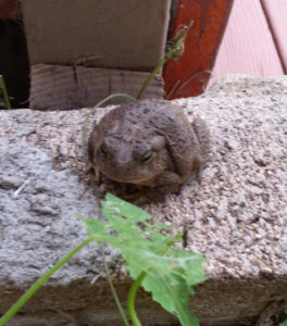 a toad on the wall
