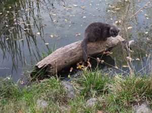 cat sitting on a log in the middle of a pond