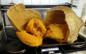 cooked hubbard squash filling the stove top